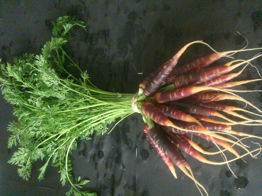 micro-purple-carrots